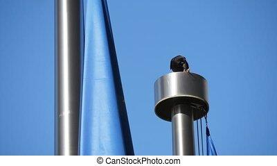Black rook sitting on a metallic ventilator at a flagpole ...