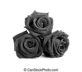 black , roos, op wit, achtergrond