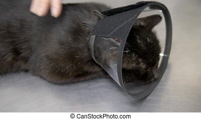 black sad cat in a cone on a table at a veterinary clinic.
