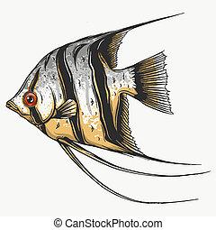 Black scalar fish on white background, vector illustration
