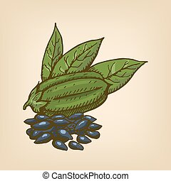 Black Sesame Seeds with pod and leaves. Vector illustration