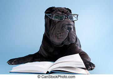 Black shar-pei dog with glasses reading a book - Smart black...