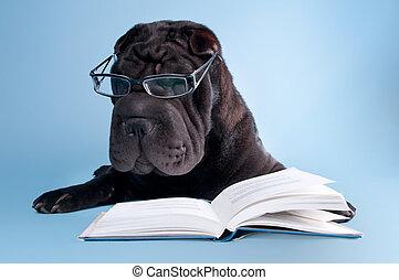 Black shar-pei reading a book - Black shar-pei dog with...