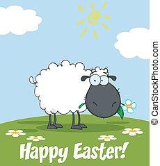 Black Sheep Eating A Flower