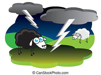 Black sheep in lightning storm