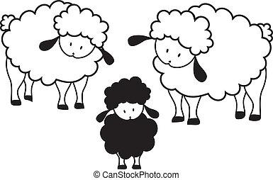 Black sheep lamb