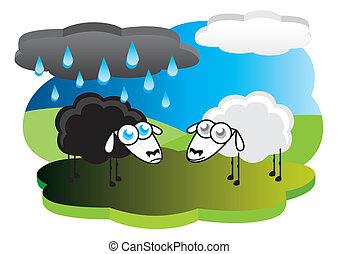 Black sheep under rain cloud