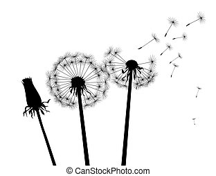 Black silhouette Dandelions. Vector Illustration.