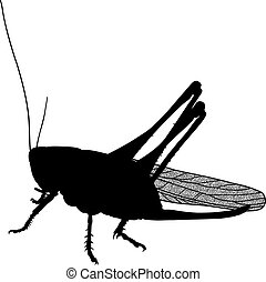 Black silhouette insect pest locust crop destroyer in the fields and gardens with carefully drawn transparent wings