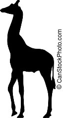 black silhouette of a giraffe. isolated vector illustration