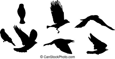 Black silhouette of bird flying. Isolated on white