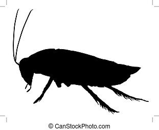 cockroach - black silhouette of cockroach