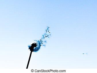 Black Silhouette of Dandelion against Blue Sky