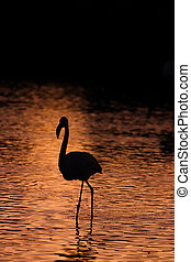 Black silhouette of flamingos in the water at sunset
