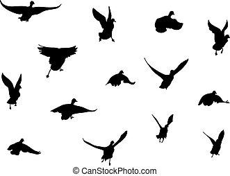 birds - Black silhouette of flying birds