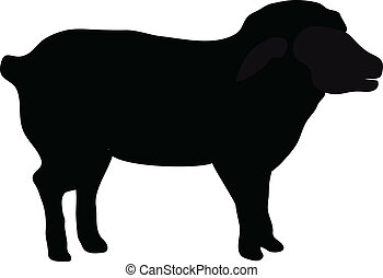 black silhouette of sheep isolated on white