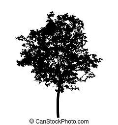 Black silhouette of tree.