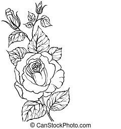 black , silhouette, rose.