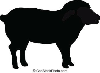black , silhouette, van, schaap, vrijstaand, op wit