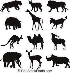 black silhouettes of an african animals, lion, hippopotamus, kangaroo,tiger, zebra, camel, deer, lynx, elephant