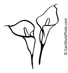 Black silhouettes of calla lilies. Vector illustration on...