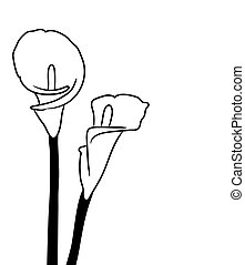 Black silhouettes of calla lilies. Vector illustration on white background.