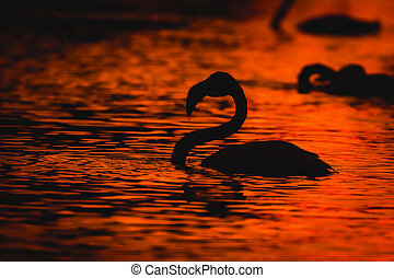 Black silhouettes of flamingos in the water at sunset