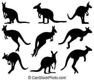 kangaroo - Black silhouettes of kangaroo, vector...
