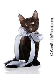 Black small kitten with a gray bow.
