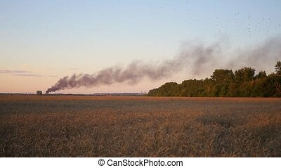 Black smoke over the wheat field. wildfire - wildfire. Black...
