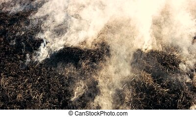 Black smoldering dry grass with smoke in wood. Burning...