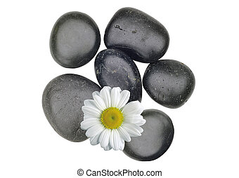 Black spa stones and white chamomile isolated on white