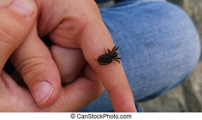 Black spider on the hand of a child.