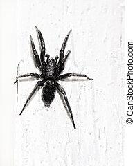Black spider on white wall.