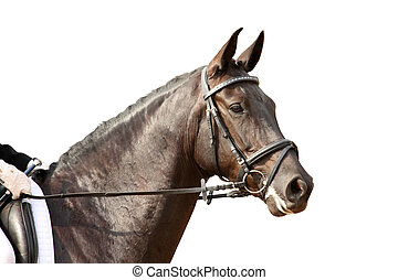 Black sport horse portrait with bridle isolated on white -...