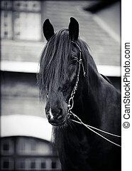 Portrait of a black horse.