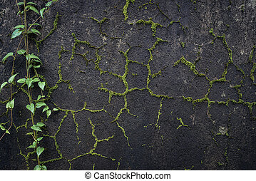 Black stone wall overgrown with moss with a tree branches