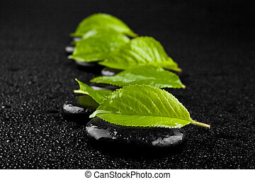 black stone with green leaves in drops of water