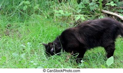 black stray cats