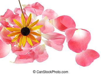 Black susan - Black eyed susan flower on rose petals...