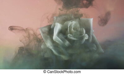 Black swirling cloud covering sparkling white rose underwater. Pollution or disease concept