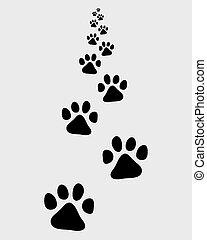 trail of cat