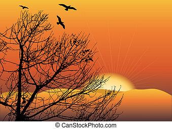 black tree in sunset