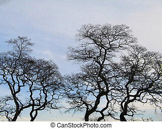 black tree in the winter time