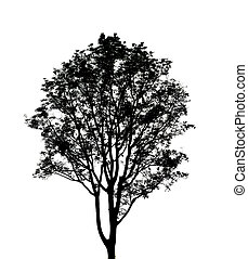 black tree silhouette on white