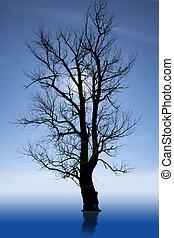 black tree standing in water