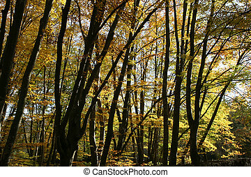 black trees with yellow leaves