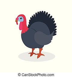 Black turkey bird, poultry farming vector Illustration on a white background