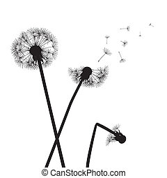 black vector dandelions on white