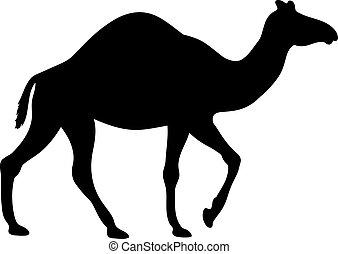 Black vector silhouette of a camel. Desert animal illustration